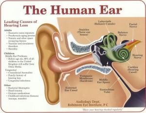 The-human-Ear